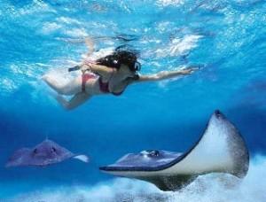 Snorkelen op Aruba