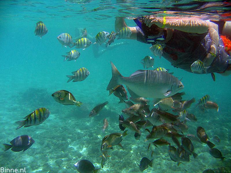 Snorkelen Aruba Genieten Van De Juwelen Van De Zee