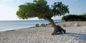 Strandvakantie Aruba