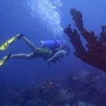 http://www.prachtigaruba.nl/wp-content/uploads/2014/04/Diepzeevissen-Aruba-23574.jpg