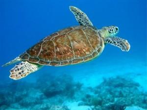 Onderwaterwereld van Aruba