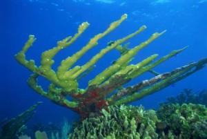 Koraal snorkelen Aruba